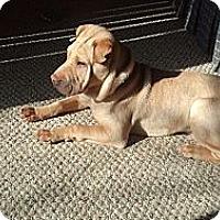 Adopt A Pet :: Quinn - Hilliard, OH