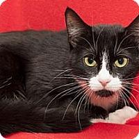 Adopt A Pet :: Mona Lisa - Lombard, IL