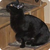 Adopt A Pet :: K-Hodnick2-Whisp - Colorado Springs, CO