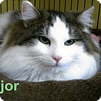 Adopt A Pet :: Major - Medway, MA