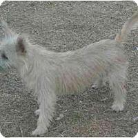 Adopt A Pet :: Sophia - Mesa, AZ