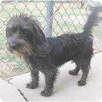 Adopt A Pet :: Dodie - Richmond, VA