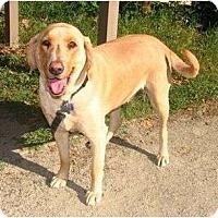 Adopt A Pet :: HUERA - La Mesa, CA