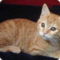Adopt A Pet :: Gerbil - North Highlands, CA