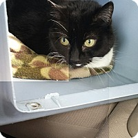 Adopt A Pet :: Pandy(Mandy'smom) - Berkeley Hts, NJ