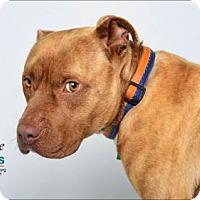 Adopt A Pet :: Deuce - Belle Chasse, LA