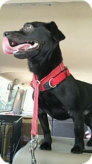 Pug/Dachshund Mix Dog for adoption in Chattanooga, Tennessee - Bubba Gump