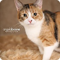 Adopt A Pet :: Kallie - Eagan, MN