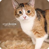 Adopt A Pet :: Kallie - Eagan, MN