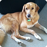 Adopt A Pet :: Tansy - Evergreen, CO