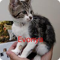 Adopt A Pet :: Evonya - Warren, OH