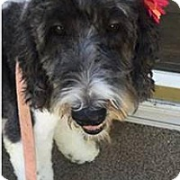 Adopt A Pet :: Maggie Mae - Adoption Pending - Piqua, OH