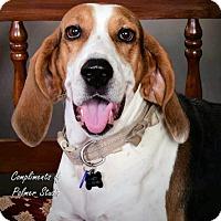 Adopt A Pet :: Fancy - Atlanta, GA