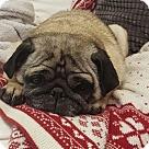 Adopt A Pet :: Lovebug