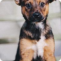 Adopt A Pet :: Jolene - Portland, OR