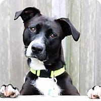 Adopt A Pet :: Norah Jones - Austin, TX