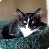 Adopt A Pet :: River - Lathrop, CA