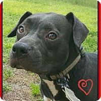 Adopt A Pet :: Natalie - Miami, FL