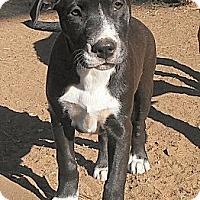Adopt A Pet :: Cassidy - El Cajon, CA