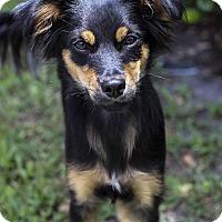 Adopt A Pet :: Blarney - Jupiter, FL