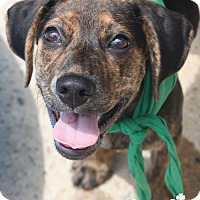 Adopt A Pet :: Parker - Washington, DC