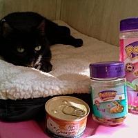 Adopt A Pet :: Midnight - Berkeley Springs, WV