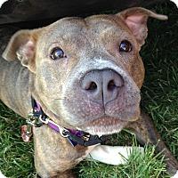 Adopt A Pet :: Memphis - Baltimore, MD