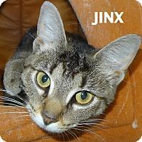 Adopt A Pet :: Jinx - Lapeer, MI