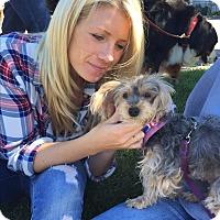 Adopt A Pet :: Chelsea - Ardsley, NY