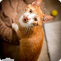 Adopt A Pet :: Zap - Leander, TX