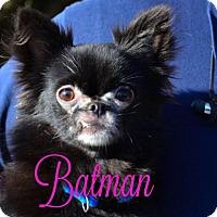 Adopt A Pet :: Batman - Tulsa, OK