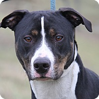 Adopt A Pet :: Lady Leona - Marietta, OH