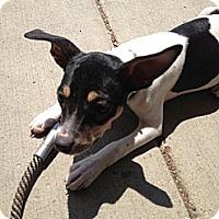 Adopt A Pet :: Lexi - Glenview, IL