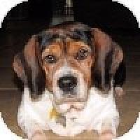 Adopt A Pet :: Minnie - Novi, MI