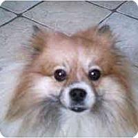 Adopt A Pet :: Pearl - Arlington, TX