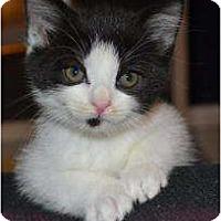 Adopt A Pet :: Galaxy - Island Park, NY