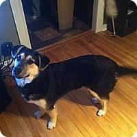 Adopt A Pet :: Dakota - Saskatoon, SK