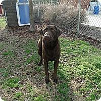 Adopt A Pet :: Woodstock - Gadsden, AL
