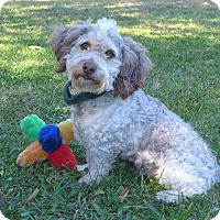 Adopt A Pet :: Squanto - Mocksville, NC
