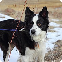 Adopt A Pet :: Gizmo - Denver, CO