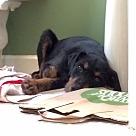 Adopt A Pet :: Elsie