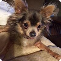 Adopt A Pet :: Bobo - Gig Harbor, WA