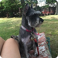 Adopt A Pet :: PJ - Acushnet, MA