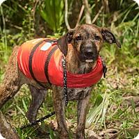 Adopt A Pet :: Albert - Weeki Wachee, FL