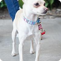 Adopt A Pet :: Cindy - Encino, CA