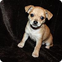 Adopt A Pet :: Tandy - Henderson, NV