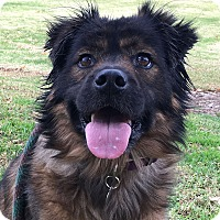 Adopt A Pet :: Baby - The Love-Bug - Canoga Park, CA