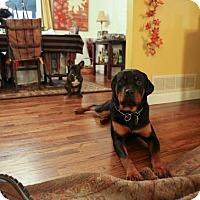 Adopt A Pet :: Quinta - Rexford, NY