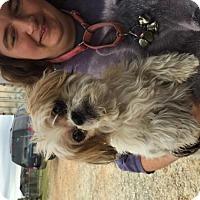 Adopt A Pet :: Charles Tappy - Spartanburg, SC