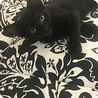 Adopt A Pet :: Rey - St. Louis, MO